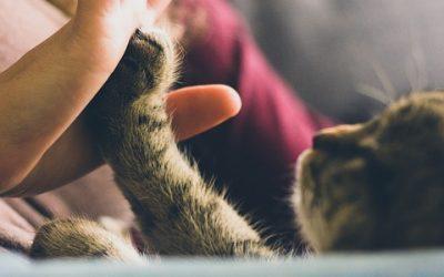 Come affrontare il lutto dell'animale domestico?